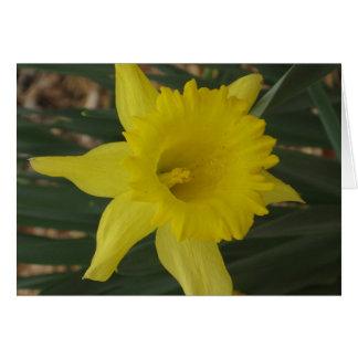 Cartão do Daffodil