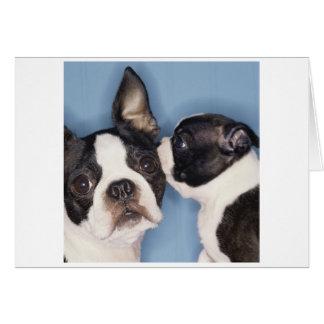 Cartão do dia das mães de Boston Terrier