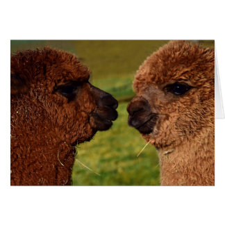 Cartão do dia dos namorados do amor BFF da alpaca