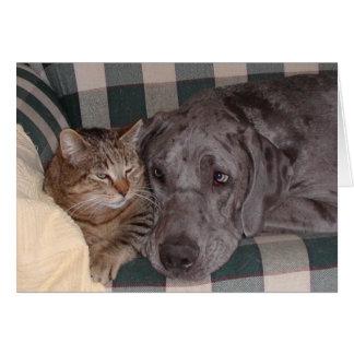 Cartão do dia dos namorados do cão do gato