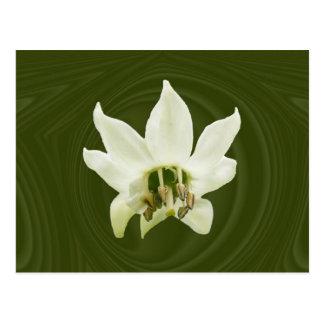 Cartão do ~ do abstrato da flor da pimenta