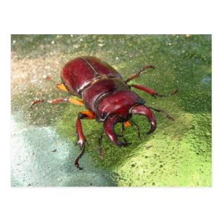 Cartão do ~ do besouro de veado
