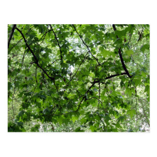 Cartão do dossel de árvore