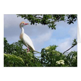 Cartão do Egret de gado