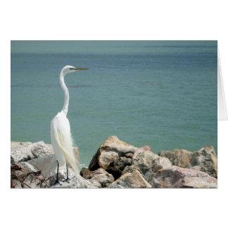 Cartão do Egret nevado