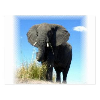 Cartão do elefante africano
