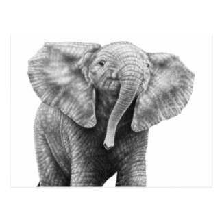 Cartão do elefante africano do bebê