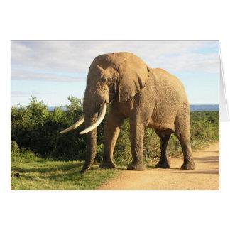 Cartão do elefante de Bull