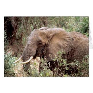 Cartão do elefante de Bush do africano