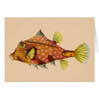 cartão do envoltório dos peixes