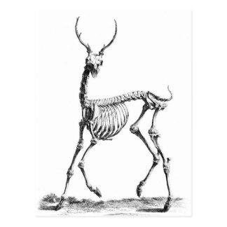 Cartão do esqueleto dos cervos