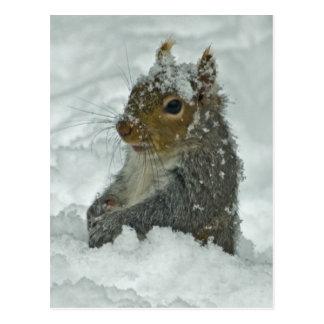 Cartão do esquilo da neve