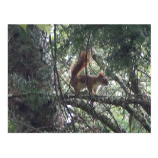 Cartão do esquilo vermelho