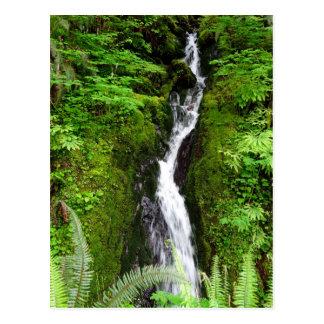 Cartão do estado de Washington: Floresta tropical