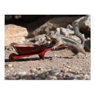 Cartão do fazendeiro do esquilo