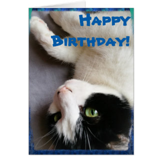 Cartão do feliz aniversario da foto do gato