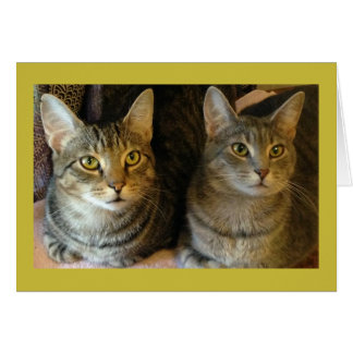 Cartão do feliz aniversario de gato de gato