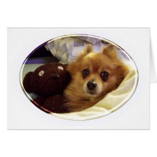 Cartão do feliz aniversario de Pomeranian
