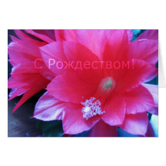 Cartão do Feliz Natal do russo, cacto de Natal
