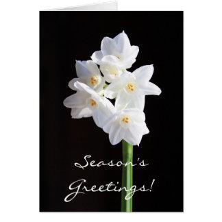 cartão do feriado - narciso de Paperwhites