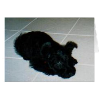 Cartão do filhote de cachorro da vaia de Kelly