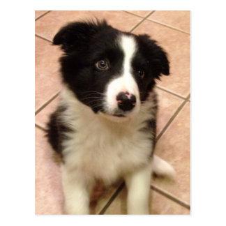 Cartão do filhote de cachorro de border collie