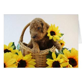 Cartão do filhote de cachorro de Goldendoodle