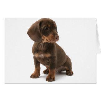 Cartão do filhote de cachorro do Dachshund