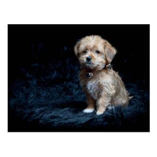 Cartão do filhote de cachorro do yorkshire terrier