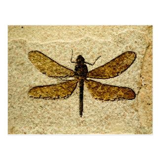 Cartão do fóssil da libélula cartão postal