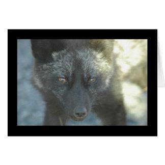 Cartão do Fox
