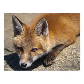 Cartão do Fox de Luna
