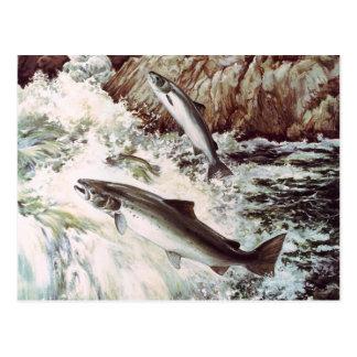 cartão do funcionamento dos salmões