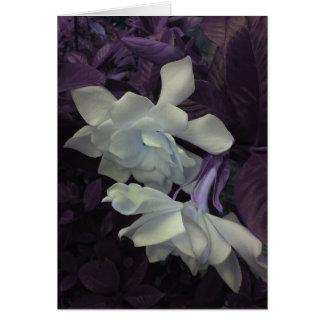 Cartão do Gardenia