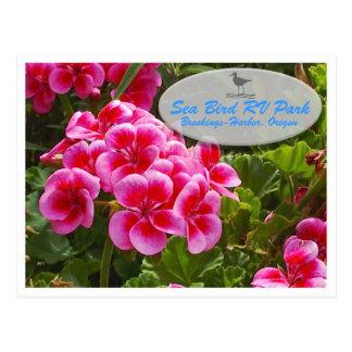 Cartão do Gardenia Cartão Postal