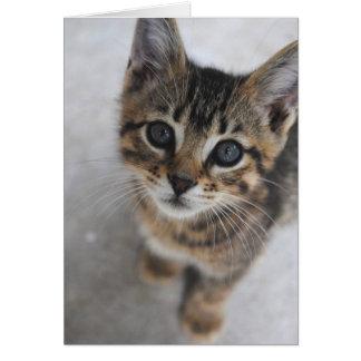 Cartão do gatinho