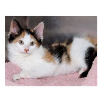 Cartão do gatinho da chita de Mediumhair do