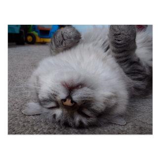 Cartão do gatinho do vampiro