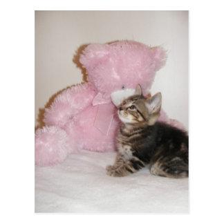 cartão do gatinho e do urso de ursinho