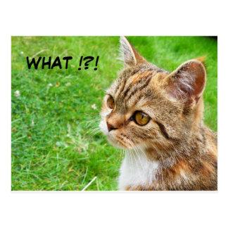 Cartão do gato