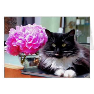 Cartão do gato & das peônias