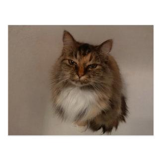Cartão do gato de chita