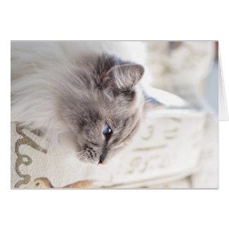 Cartão do gato de Millie Ragdoll - descansando