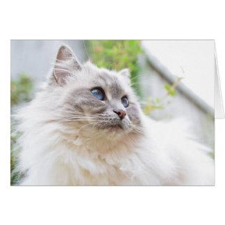 Cartão do gato de Ragdoll