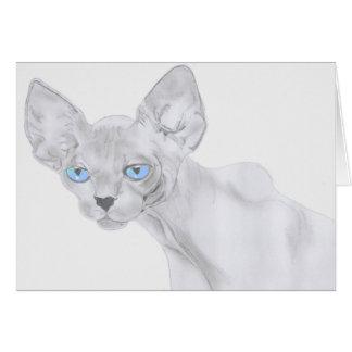 Cartão do gato de Sphynx