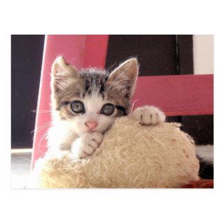 cartão do gato do brinquedo do gatinho das suiças