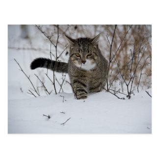 cartão do gato do inverno