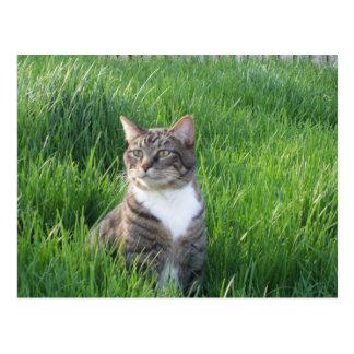 Cartão do gato do menino de natureza
