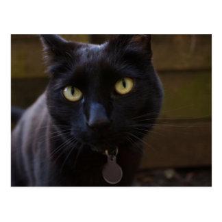 Cartão do gato preto
