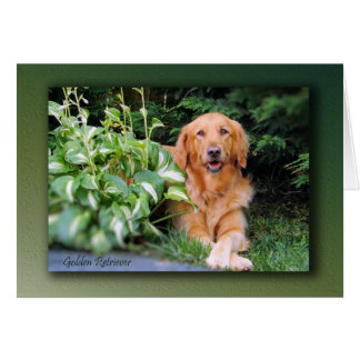 """Cartão do golden retriever - """"Bailey bonito """""""